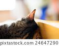 一只猫的轮廓 24647290