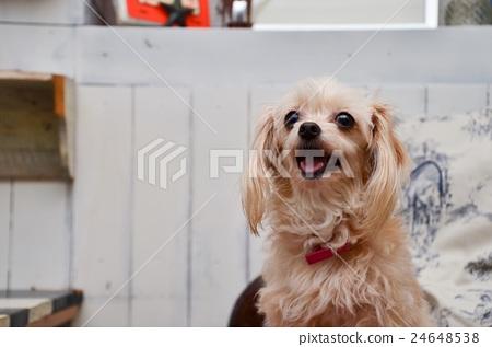mixed breed dog, dog, dogs 24648538