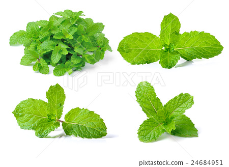 mint leaf on white background 24684951