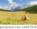 Beautiful alpine panorama 24697039