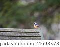紅尾鴝 鳥兒 鳥 24698578