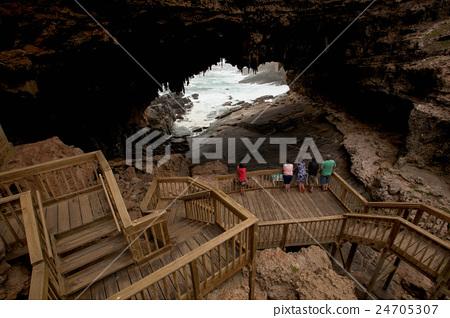 袋鼠島 澳洲 24705307