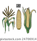 vegetable, ingredient, corn 24706914