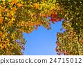 枫树 枫叶 红枫 24715012