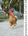 gokaminiwatori, chicken, chickens 24716738