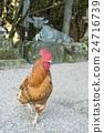 gokaminiwatori, chicken, chickens 24716739
