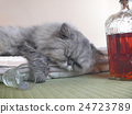 drinking too much, cat, liquor 24723789