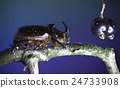 European rhinoceros beetle and Blackcurrant 24733908