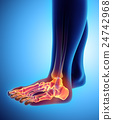 3D illustration of Foot Skeleton, medical concept. 24742968