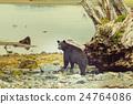 Black bear 24764086