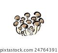 蘑菇 插图 蔬菜 24764391