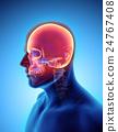 3D illustration of Cranium, medical concept. 24767408