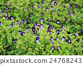 a large of flower bed 24768243