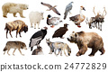 brown bear and other North American animals 24772829