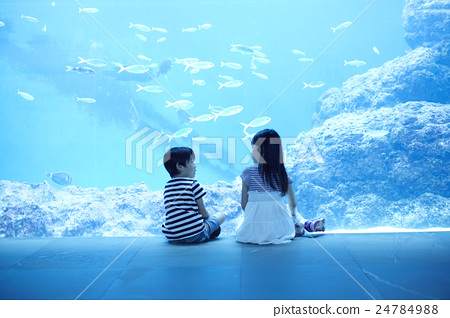 person, child, aquarium 24784988