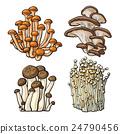 Set of shimeji, oyster, enokitake and king trumpet 24790456
