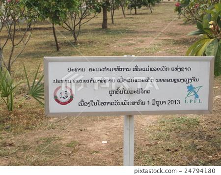 Lao 's holy tree Manikoth 24794180