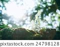 植物 岩石 陽光 24798128