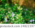 Close Single Small Green Vernal Sprig Of Future 24822397