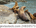 Rookery Steller sea lions. Island in Pacific Ocean 24830573