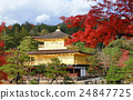 Golden Pavilian at Kinkakuji Temple with red maple 24847725