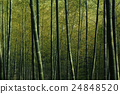 Bamboo Forest Nature Green Bamboo Shoot Concept 24848520