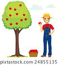 Farmer Picking Apple 24855135