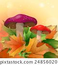 Red mushroo 24856020