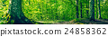 Green beech forest in a panorama scenery 24858362