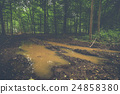 puddle, forest, dirt 24858380