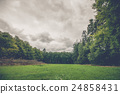 Forest landscape with a green meadow 24858431