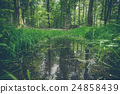 water, forest, puddle 24858439