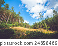 Dry meadow in a pine tree forest 24858469