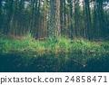 puddle, nature, tree 24858471