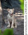 lion 24859017