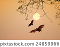 Bat silhouettes agent sunset time 24859966