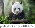 panda is eating 24861053