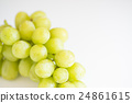muscat, the taste of autumn, muscat grape 24861615