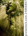 背景 森林 自然 24866807