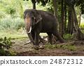 大 大象 森林 24872312