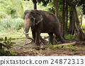 大 大象 森林 24872313