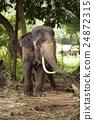 大 大象 森林 24872315