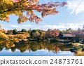 枫树 枫 红枫 24873761