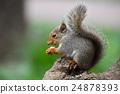 [동물] 니홍리스 (10) 24878393