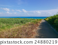 เกาะโคฮามา 24880219