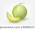 Cantaloupe melon, fruit vector illustration 24888925