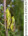 Alpine green grasshopper coupling 24891997