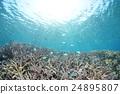海洋 海 蓝色的水 24895807