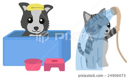 洗澡的狗洗澡的貓 24906073