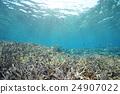 海洋 海 蓝色的水 24907022